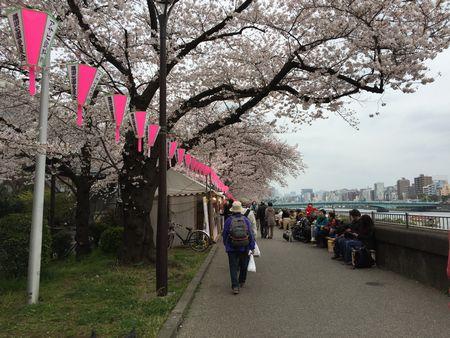 20160410sumidagawa2.jpg