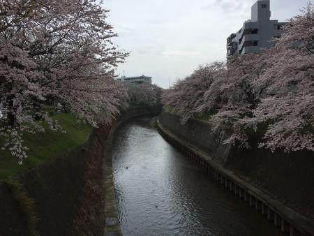 20160413sakura2.jpg