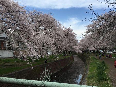 20160413sakura5.jpg
