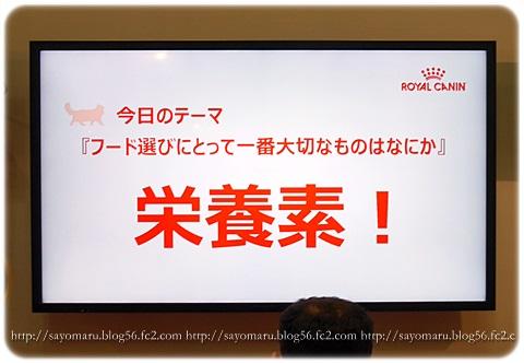 sayomaru16-690.jpg