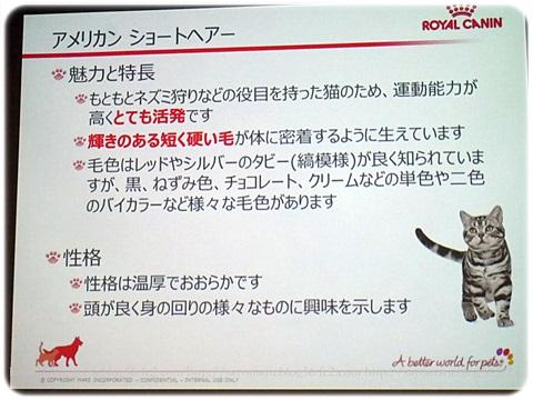 sayomaru17-444.jpg