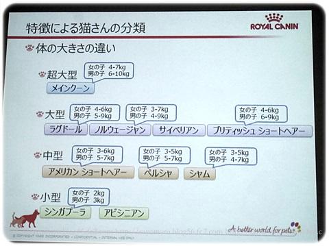 sayomaru17-453.jpg