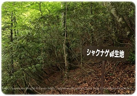 sayomaru17-568.jpg