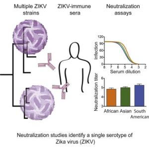 Broadly Neutralizing Activity of Zika Virus-Immune Sera
