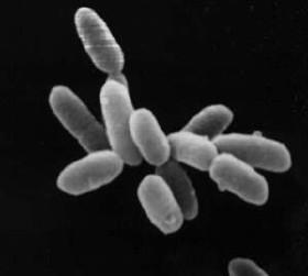 Archaea.jpg