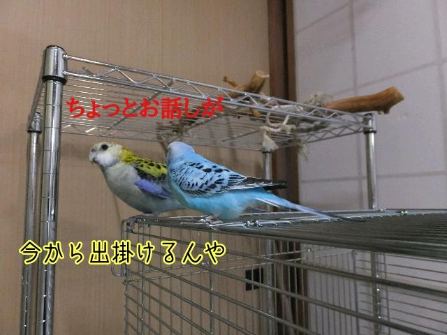 20160807171706a51.jpg