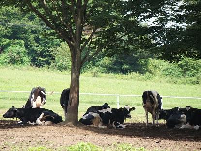 木の下牛2