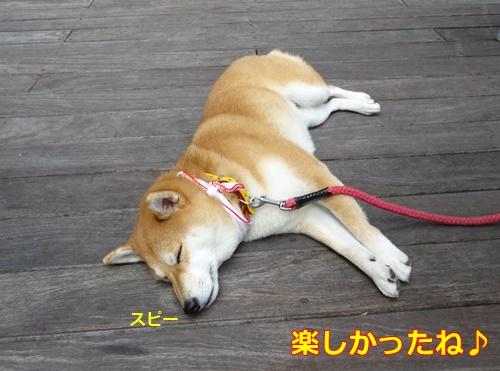 7疲れました