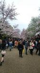 上野公園の桜2016年その2