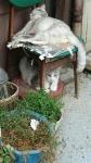 今日のネコちゃん2