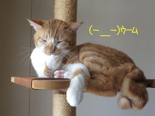 考えるネコ