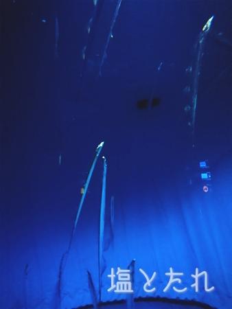 DSC_0381_20160816_04_宮島水族館