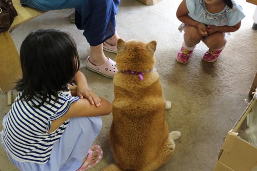 長田円右衛門 七代目茶屋 日月荘 看板柴犬
