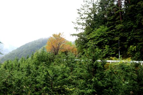 金櫻神社から黒平への道 918 (1)