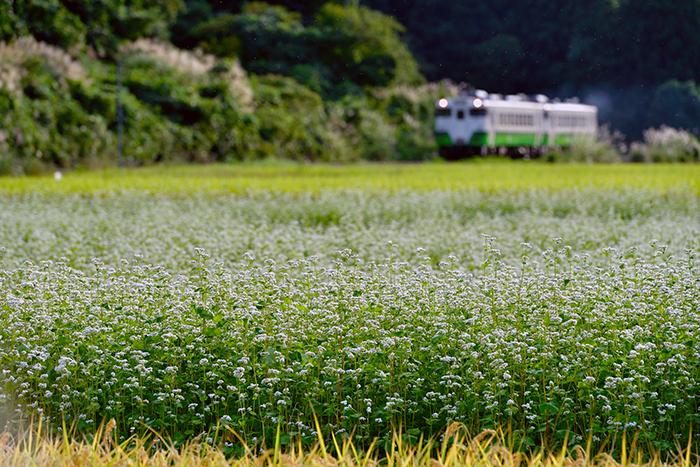 sakamotosoba
