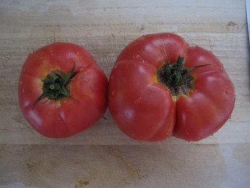 トマト煮1 16.8.19