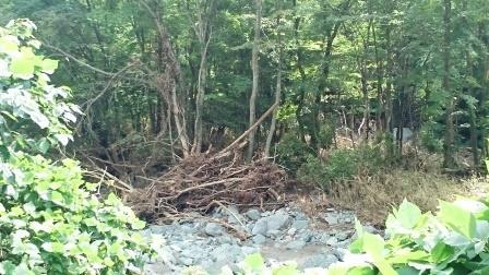 久慈渓流倒木