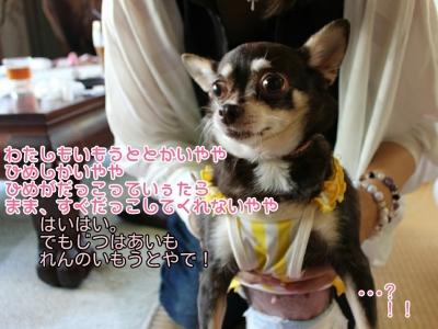 16-08-09-09-12-49-736_deco.jpg