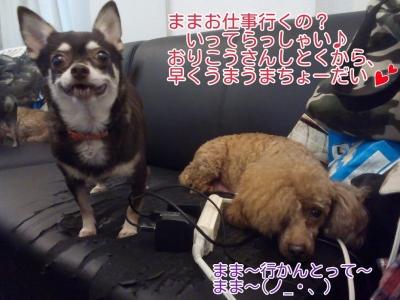 16-09-18-14-03-59-477_deco.jpg