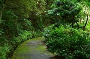 日本庭園の奥へ続く道