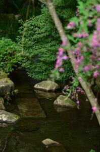 日本庭園の中を流れる小川