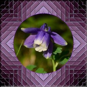 thumbnail_DSC_8408-2xxccft.jpg