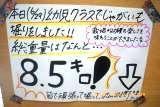 じゃがみこし (3)