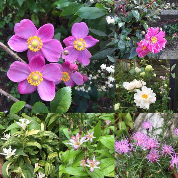 10,5秋の花