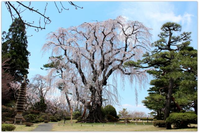 青森県 弘前市 藤田記念庭園 梅 桜 観光 写真