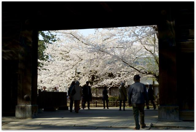 青森県 弘前市 弘前城 弘前公園 弘前さくらまつり 桜 さくら サクラ 写真 観光