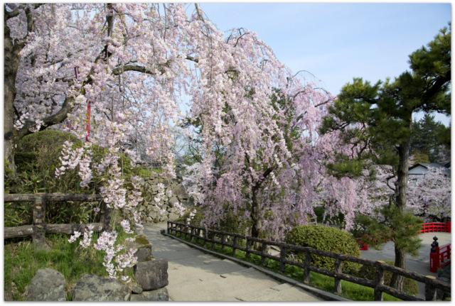 青森県 弘前市 弘前公園 弘前 弘前さくらまつり 桜 さくら サクラ 写真 観光