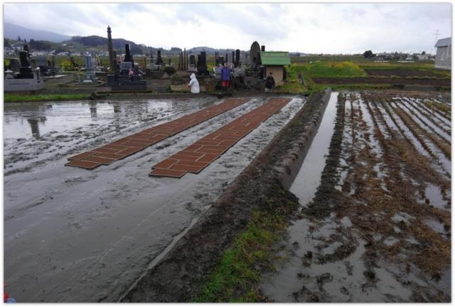 農作業 田んぼ 種籾