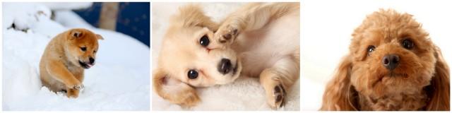 青森県 弘前市 ペット 写真 撮影 カメラマン 出張 ロケーション 犬 猫 動物