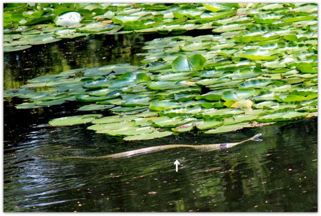 青森県 弘前市 弘前公園 弘前城 写真 野鳥 カラス ヘビ