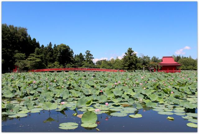 青森県 平川市 猿賀公園 蓮の花 写真 猿賀神社