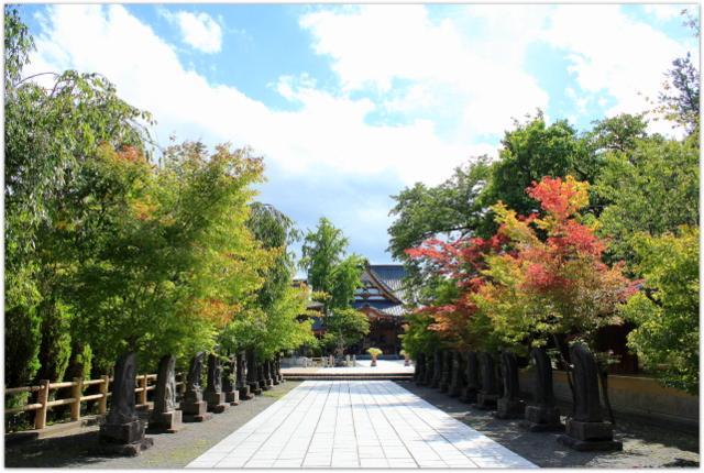 青森県 弘前市 最勝院 五重塔 彼岸花 曼珠沙華 写真