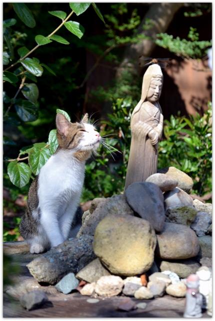 山形県 山形市 山寺 猫 ねこ ネコ 写真
