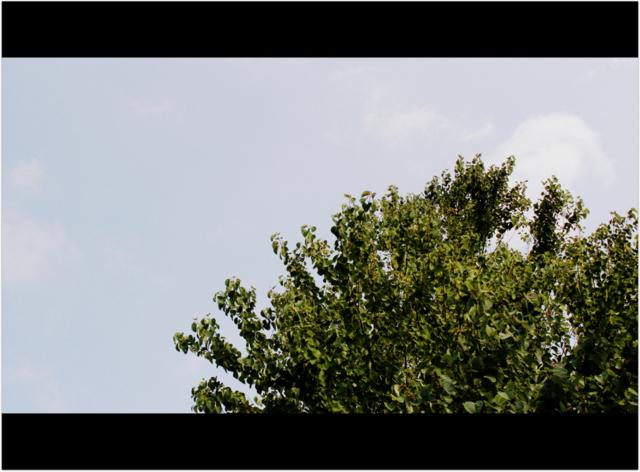 青森県 弘前市 小学校 行事 お山参詣 撮影 編集 ビデオ ムービー DVD 動画 カメラマン
