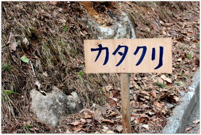 青森県 弘前市 岩木山 桜林公園 カタクリ 花