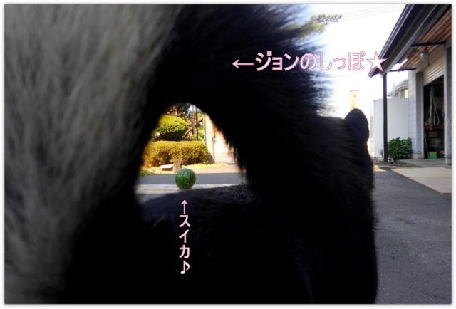 青森県 弘前市 写真 撮影 出張 家 自宅 カメラマン フリーカメラマン 写真観 スタジオ 写真家 家族 ロケーション 記念
