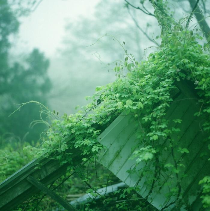 霧の朝/廃墟