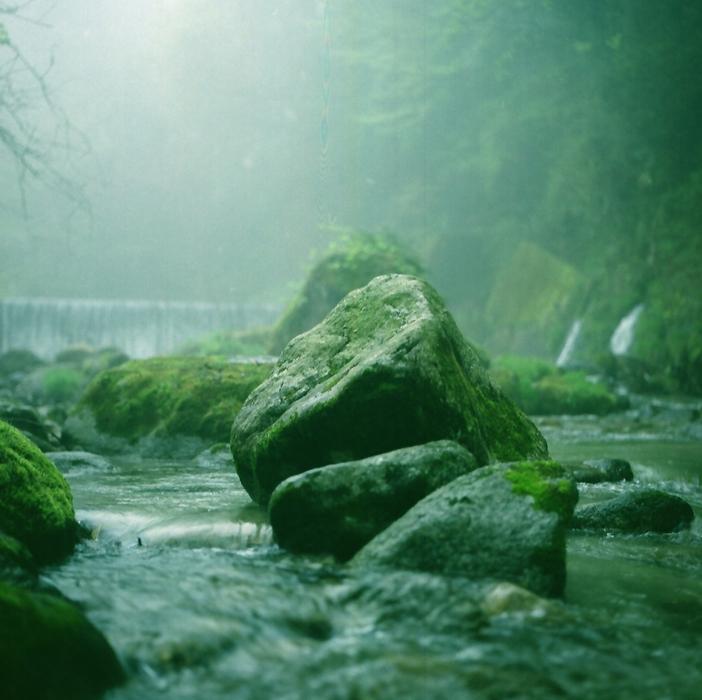 霧の朝/渓流