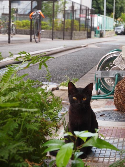 黒仔猫/路地裏