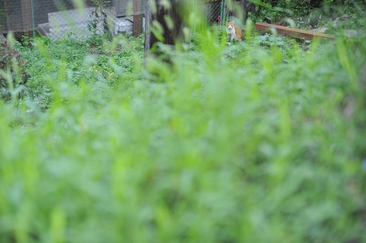 隠れ猫/緑の中