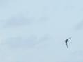 160417 武蔵野のツバメ3