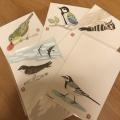 鎌倉 野鳥の絵はがき