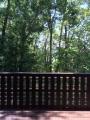 ポタジェのある森の家風景