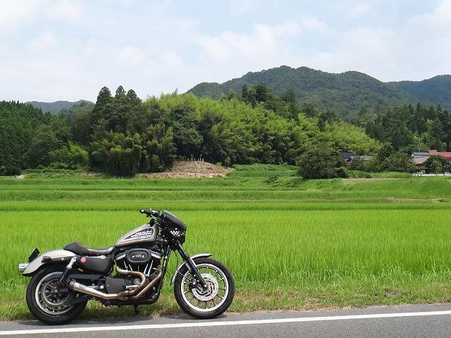 s-10:55水田