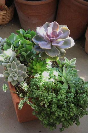 スクエアー鉢 寄せ植え