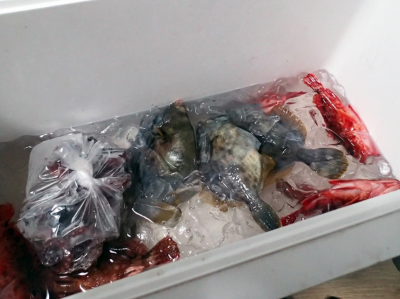 20160920海釣り釣果